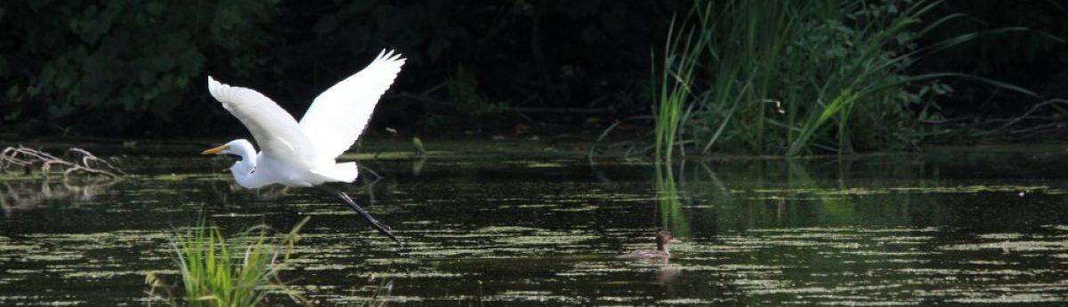 Club d'ornithologie de la région des Moulins